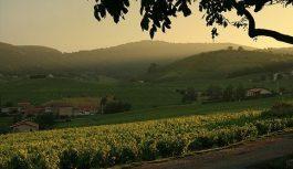 Франция: родина вин и винограда